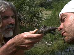 Predator expert Manny Puig introduces Chris' nose to a snapping   turtle