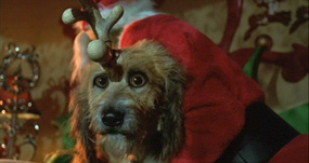 The Grinch Who Stole Christmas Dog.How The Grinch Stole Christmas Hd Dvd Dvd Talk Review Of