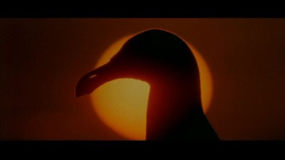 jonathan livingston seagull movie dvd