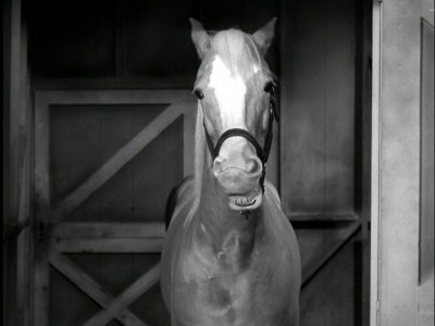 Mister Ed The Complete First Season  Dvd Talk Review Of. Employer Health Insurance Boca Raton Plumbers. Carpet Cleaning San Antonio Texas. San Francisco State University Film. Opengl Data Visualization Pest Control Coupon. Dui Expungement In California. Purdue Industrial Design Degree In Technology. Creative Writing Certificate Online. Smtp Server Configuration Top Cable Companies