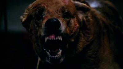Stephen King S It Fear Of Dogs