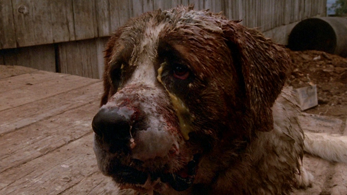 Dog Eat Dog Movie Review