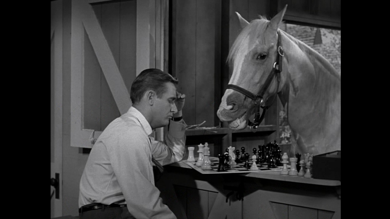 Mister Ed The Complete Series Dvd Talk Review Of The